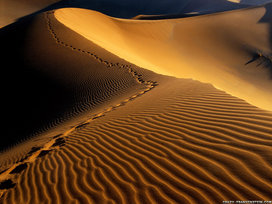 Desert_footprints