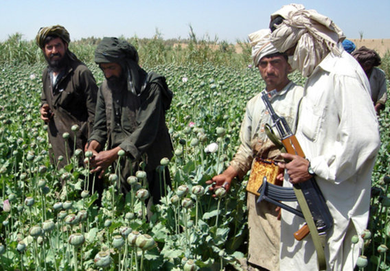 Afghans_in_poppy_field