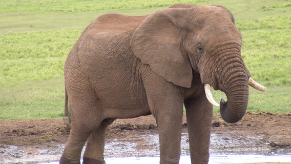 Elephant-african-savannah-drinking-in-waterhole-water-hole-in-addo-elephant-park-eastern-cape-south-africa-1-jr