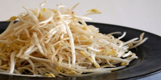 Bean_sprouts3