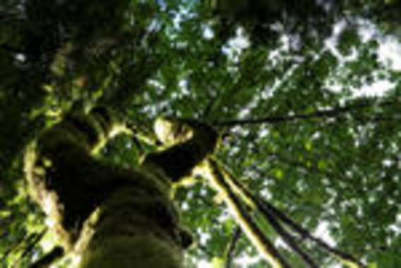 Tree_in_a_forest..freestockimagesite.com