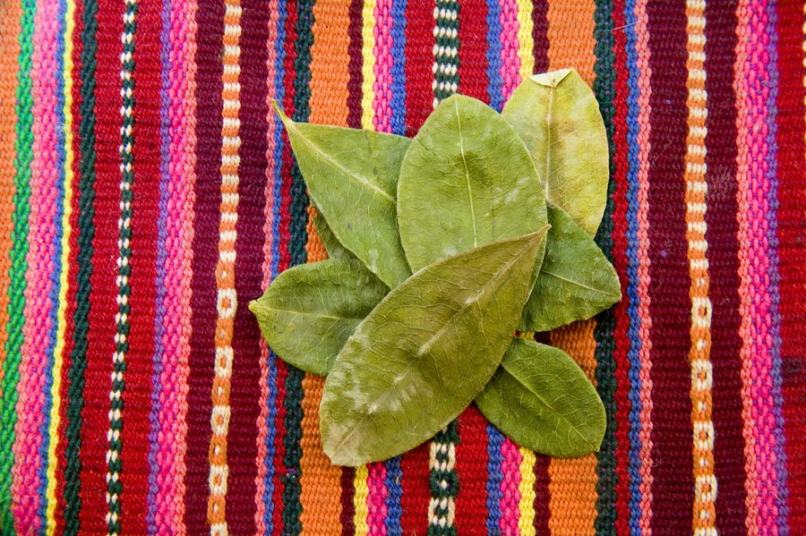 Coca_leaves_bolivia