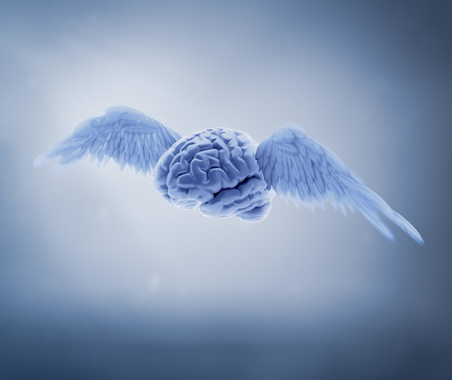 Brain_wings