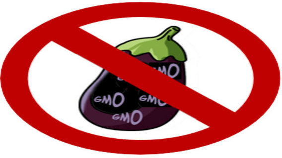 No-gmo-eggplant_big_think