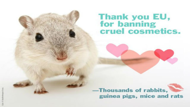 Animal-testing-big_think