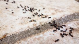 Ants_group
