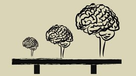 Growing_brain