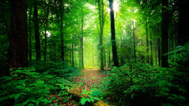 Forest_by_nihal_jabin_16x9