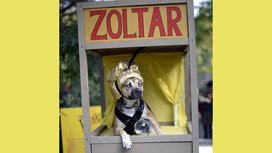 Fortune_telling_dog