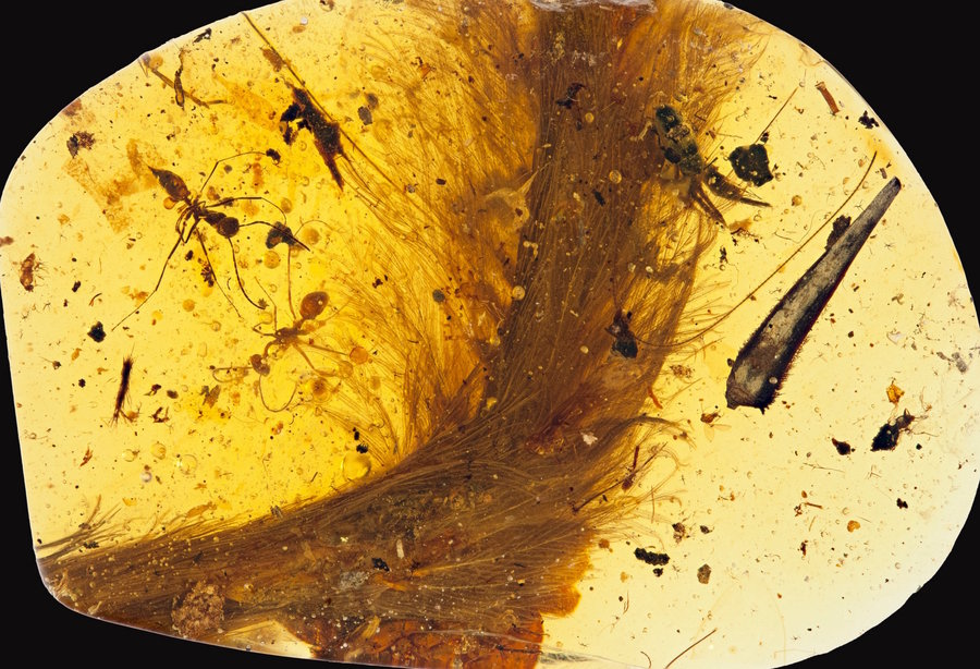 """Scientists Are """"Blown Away"""" to Find a Feathered Dinosaur Tail Preserved in Amber"""