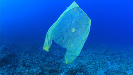 1682478-poster-1280-plasticbags