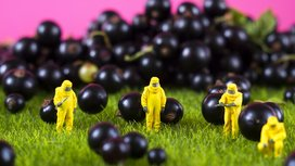 Hazmat-suits-and-blueberries