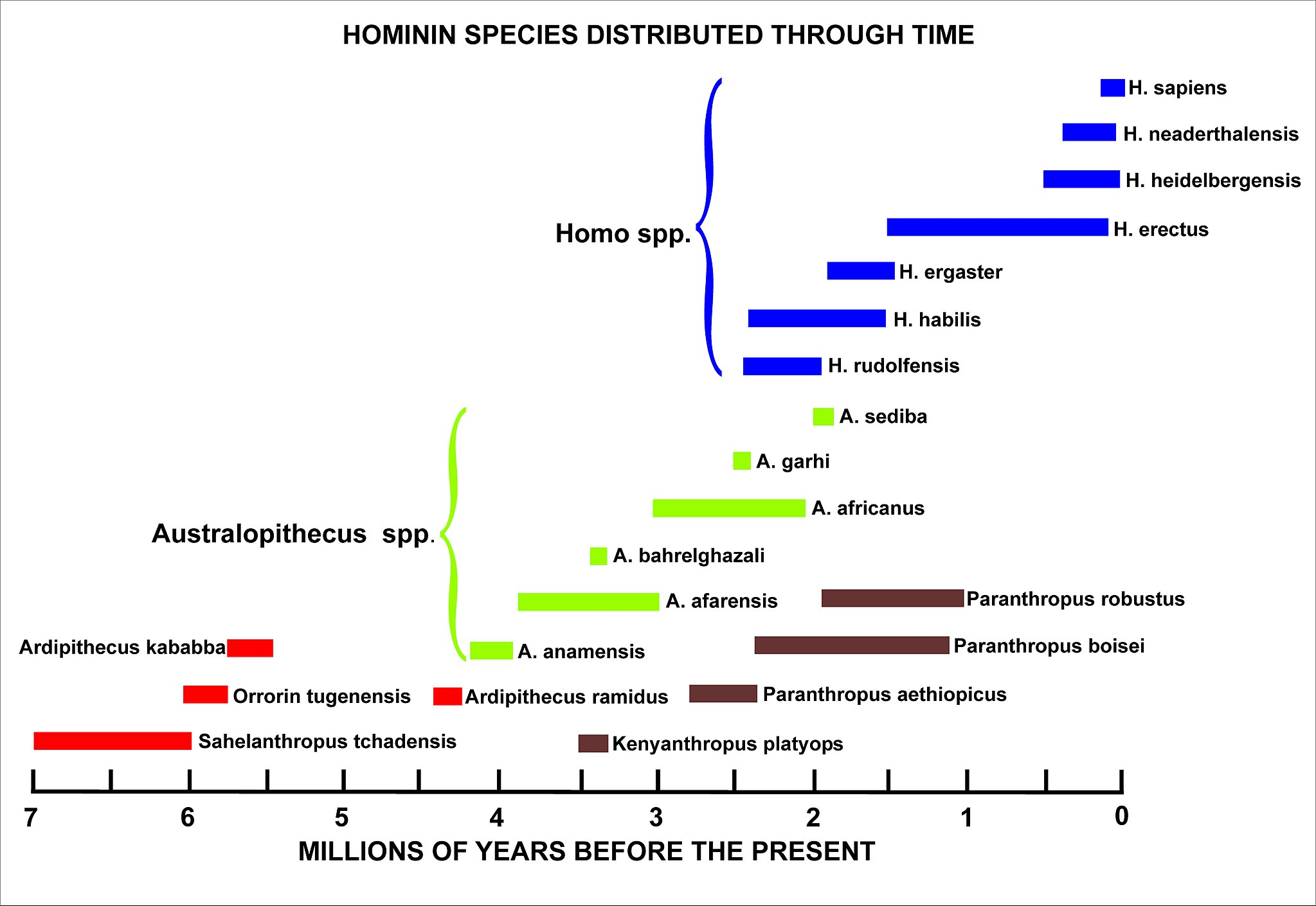 Hominid Evolution Timeline These Footprints Are S...