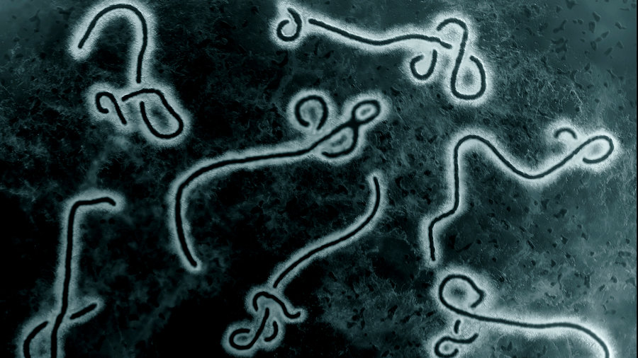 Sue-demond-hellman-ebola-bg2